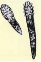 """демодекс """"короткий"""" Demodex Brevis (слева), демодекс """"длинный"""" Demodex Folliculorum (справа)"""